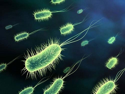 Vi khuẩn máy giặt